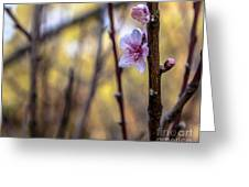 Time To Bloom Greeting Card