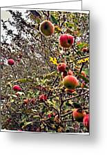 Time To Pick The Apples Greeting Card