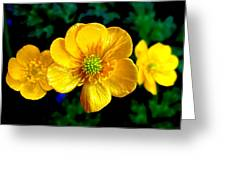 Timeless Buttercup Greeting Card