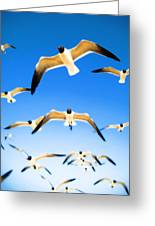 Timeless Seagulls Greeting Card