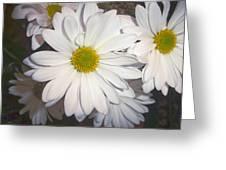 Timeless Sunshine Daisy Greeting Card