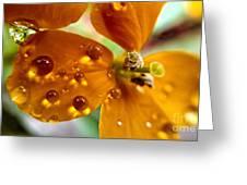 Tiny Dew Drop On Wild Flower Macro Greeting Card