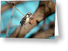 Tiny Downy On Hickory Nut Greeting Card
