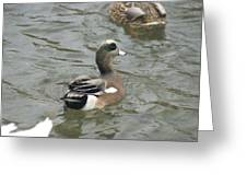 Adorable Tiny Duck Swimming Greeting Card