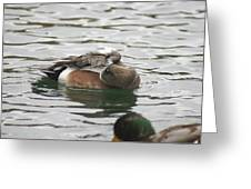 Tiny Duck Cleaning 1 Greeting Card
