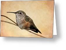 Tiny Hummingbird Resting Greeting Card