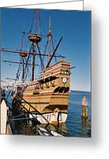 Tiny Mayflower At Plymouth Rock Greeting Card