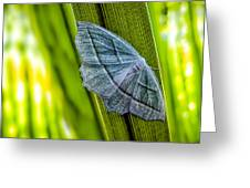 Tiny Moth On A Blade Of Grass Greeting Card