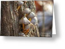 Tiny Mushrooms On The Side Of A Stump Greeting Card