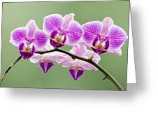 Tiny Orchid Faces Greeting Card