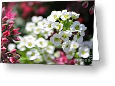 Tiny Pink And Tiny White Flowers 2 Greeting Card