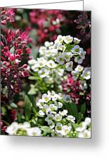 Tiny Pink And Tiny White Flowers Greeting Card