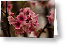 Tiny Pink Blossoms Greeting Card