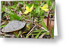 Tiny Turtle Close Up Greeting Card