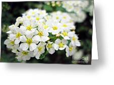 Tiny White Yellow Flowers Greeting Card