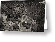Tioga Pass Road Sepia Greeting Card