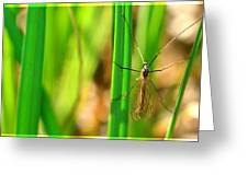 Tipula Greeting Card by Tommytechno Sweden