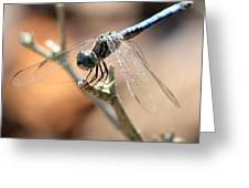 Tired Dragonfly Square Greeting Card
