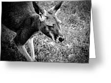 Tired Old Kangaroo Greeting Card