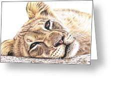 Tired Young Lion Greeting Card