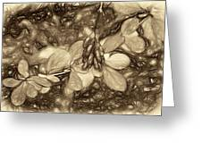 Tis The Season - Antique Sepia Greeting Card