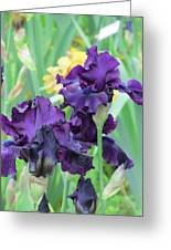 Titan's Glory Iris Greeting Card