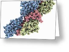 Titin-telethonin Complex, Molecular Greeting Card