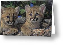 Tk0615, Thomas Kitchin Cougarmountain Greeting Card