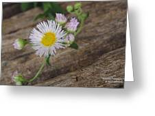 To Weed Or Not To Weed... Greeting Card