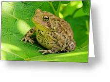 Toad Sitting Greeting Card
