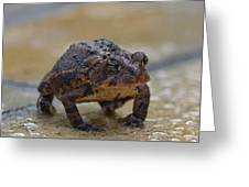 Toad Takes A Stance Greeting Card
