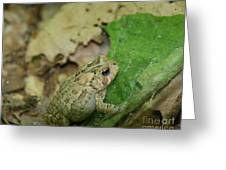 Toad Under Cover  Greeting Card