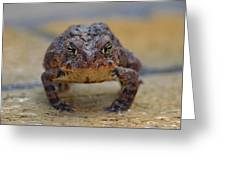 Toad With An Attitude Greeting Card