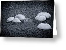 Toadstools V6 Greeting Card by Douglas Barnard