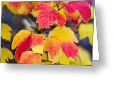 Toasted Autumn - Featured 3 Greeting Card