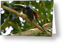 Toco Toucan Amazon Jungle Brazil Greeting Card