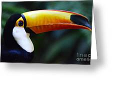 Toco Toucan Brazil Greeting Card