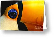 Toco Toucan Face Greeting Card