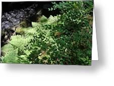 Tod Creek  Greeting Card