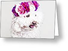 Toffee The Maltipoo Greeting Card