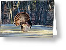 Tom Turkey Fan Greeting Card
