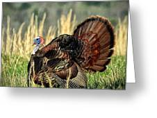 Tom Turkey Greeting Card by Jaki Miller