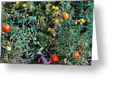 Tomato Garden. Greeting Card