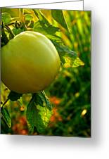 Tomato On The Vine Greeting Card