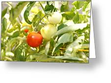 Tomatoes On The Vine Greeting Card