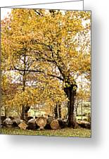 Tombs Under Oaktree Greeting Card