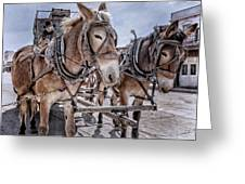 Tombstone Mules Greeting Card