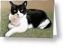 Tomcat Baloo Greeting Card
