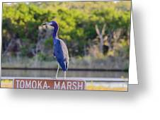Tomoka Marsh Little Blue Heron Greeting Card