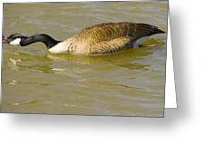 Tongue In Goose I Greeting Card